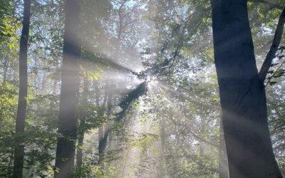 Feuersalamander und Flüsterwald